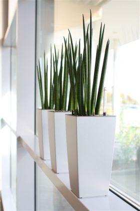 die 25+ besten ideen zu indoor outdoor wohnzimmer auf pinterest ... - Grose Wohnzimmer Pflanzen