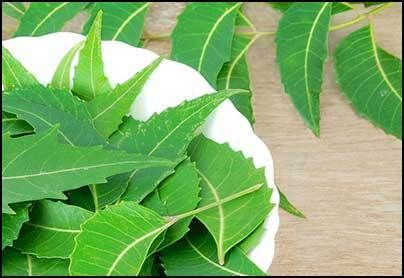 What is Neem Oil and how effective is it for Faster Hair Growth and Curing Hair Loss? Here are 10 ways to use Neem Oil to reverse the effects of Baldness or Hair Loss