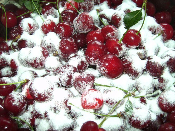 Die Früchte des ca. 50 Jahre  alten nun vom Weidenbohrer befallenen Weichselbaums
