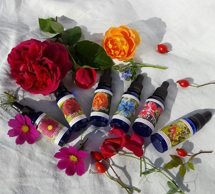 Some of my flower essences and their flowers. Flower essences are ancient soul medicines perfect for 21st Century life with its emotional and mental challenges. Essences align you with your soul forces, dissolving mental conflict and emotional confusion.