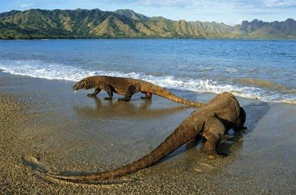 Komodo Island, Indonesia: like jurassic park, only real ...