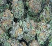 Buy Medical Marijuana Online: Weed Stores, Shops & Distributors