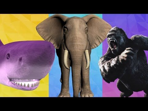 Finger Family King Kong Cartoon with Shark & Elephant Nursery Rhymes for Children to learn and Enjoy this song and make sure to like and subscribe to My Superhero Rhymes for Finger Family Songs.