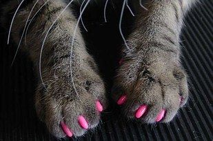 Soft Paws are a safe alternative to declawing. | 23 Insanely Clever Products Every Cat Owner Will Want