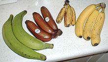 All different kinds of bananas. Green bananas, plantains, yellow bananas, figs