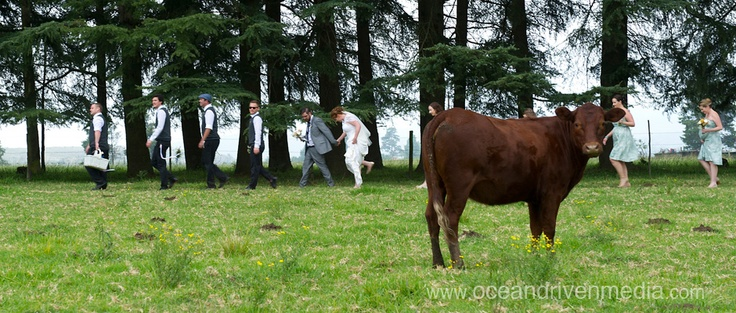 Wedding at Providence in the KZN Midlands.  Bridal shoot in a field of trees…