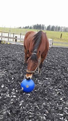 Pferde lieben raufutterball