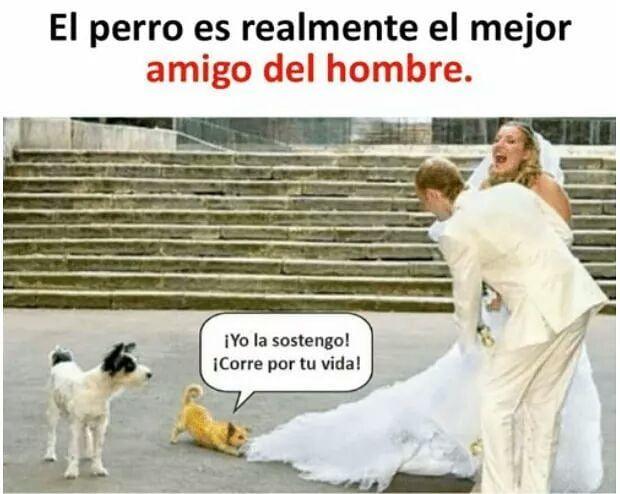 �� Etiqueta a tus amigos! #instachile #chilegram #instasantiago #chile #memesenespañol #memesespañol #memes #chistes #humor #perro #perros #dog #dogs #matrimonio #doglover #doglovers http://quotags.net/ipost/1642499842017901788/?code=BbLVOdrHLzc