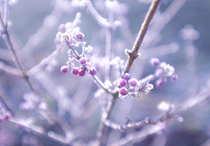 Le blog Little-Idea vous explique comment apaiser vos petits maux d'hiver (rhume, toux sèche, angine, ...) grâce aux huiles essentielles
