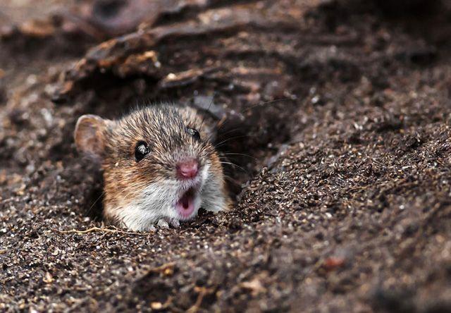 Vicces fotók: 20 állat, aki nagyon meglepődött http://www.nlcafe.hu/otthon/20150505/allat-meglepodott-vicces-fotok/