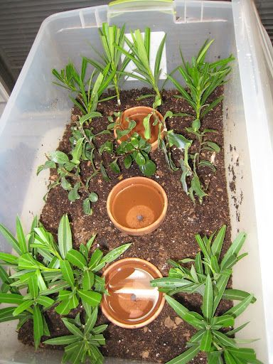 Self Watering Propagation Box, Ideal For Harsh Summer Climates Here In The  Southwest.
