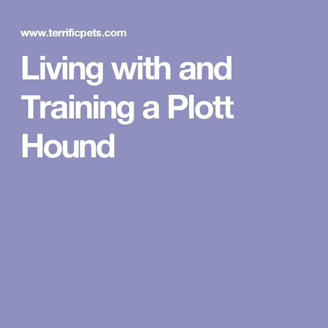 Living with and Training a Plott Hound