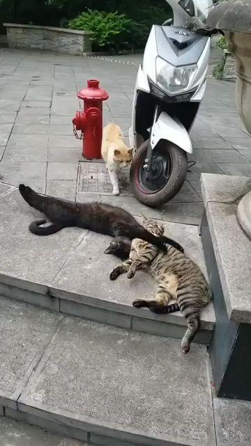 Un chat pris en flag avec sa maîtresse