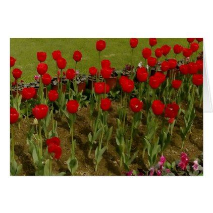 Tulips - greeting card - diy cyo customize create your own personalize