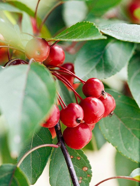 1000 id es sur le th me plante grimpante feuillage for Plante grimpante ombre feuillage persistant