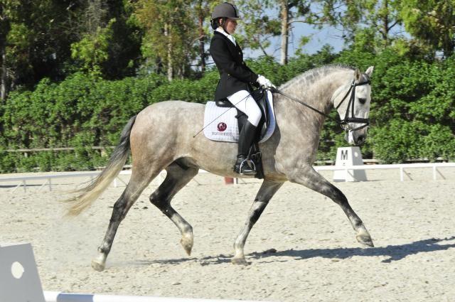 Caballo en venda PRE Pura raza española http://www.equirodi.es/anuncios/caballos-en-venta/pre-pura-raza-espanola.htm