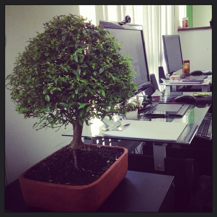 El nuevo integrante de PÚBLITAL #bonsai
