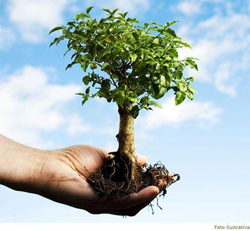 Força da Terra :: Reflorestamento