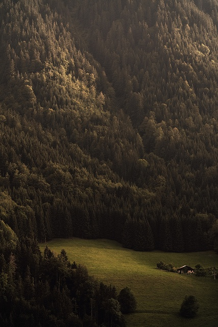 by Alvarictus, via FlickrForests, Dreams Home, Mountain, Wood, Nature, Trees, France, House, Places