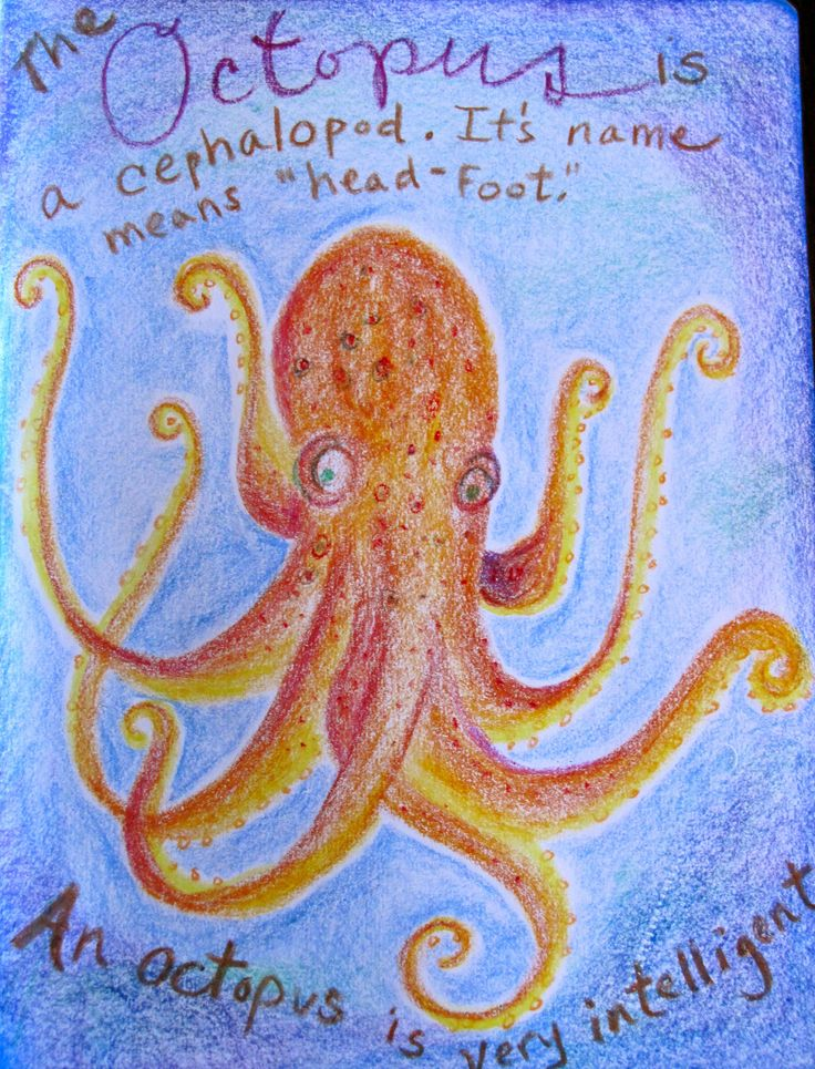 Octopus Main Lesson book block crayon drawing for Live Ed HUman Animal family study.