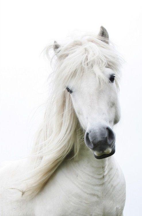 Precious white baby..❤the grey muzzle..