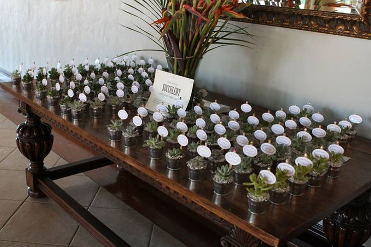 Love This Succulent Favor Display From Our Customer