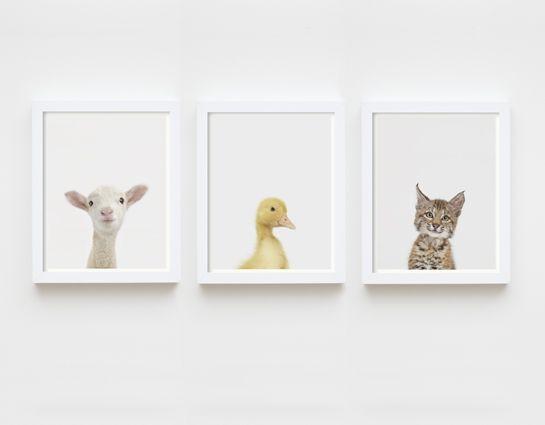 Lamb Close-Up - The Animal Print Shop by Sharon Montrose
