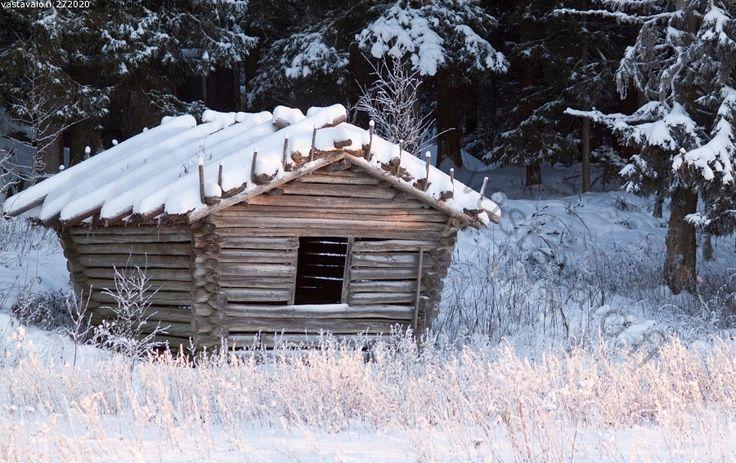 Heinälato - pyöröhirsi perinteinen heinälato kuura lato kuusi metsä maaseutu lumi luminen talvi Pohjanmaa pelto valkoinenheinä heinät pakka...