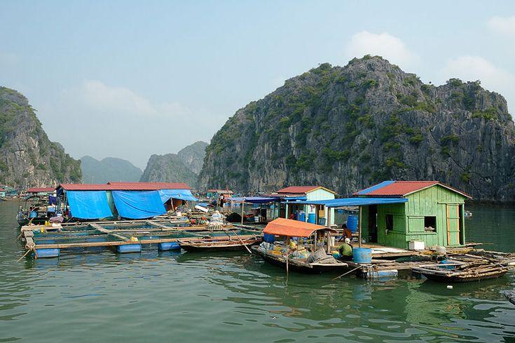 Fishing Village in HaLong Bay Vietnam  -  Wikipedia, the free encyclopedia