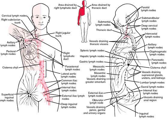132 best Lymphatic Drainage Massage images on Pinterest