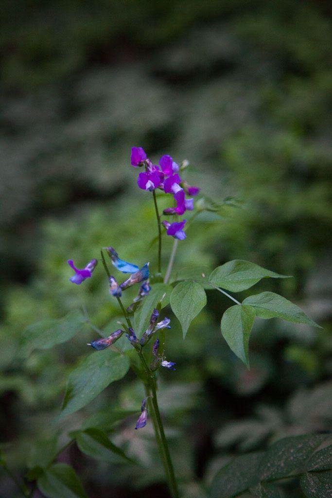 https://flic.kr/p/DJH81d | Flowers, Karkali Nature Park | Picture: Retkipaikka