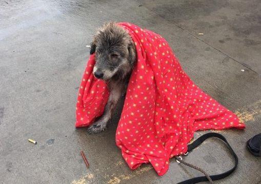 Ausgesetzter Hund wird gerettet