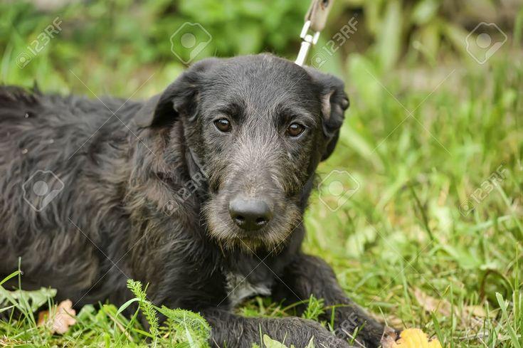 Black mongrel dog