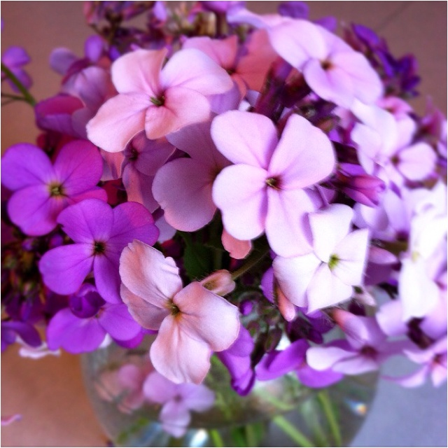 Phlox- our souls are united