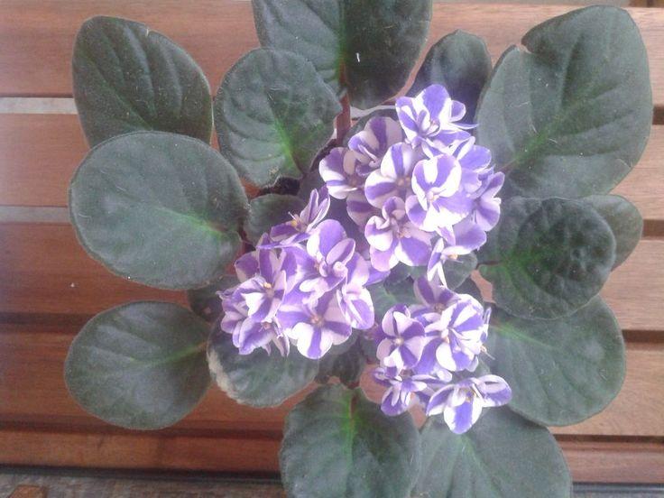 Las flores de hoy y el Té de cada mañana