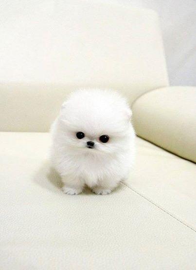 O M G Sooooo Cute