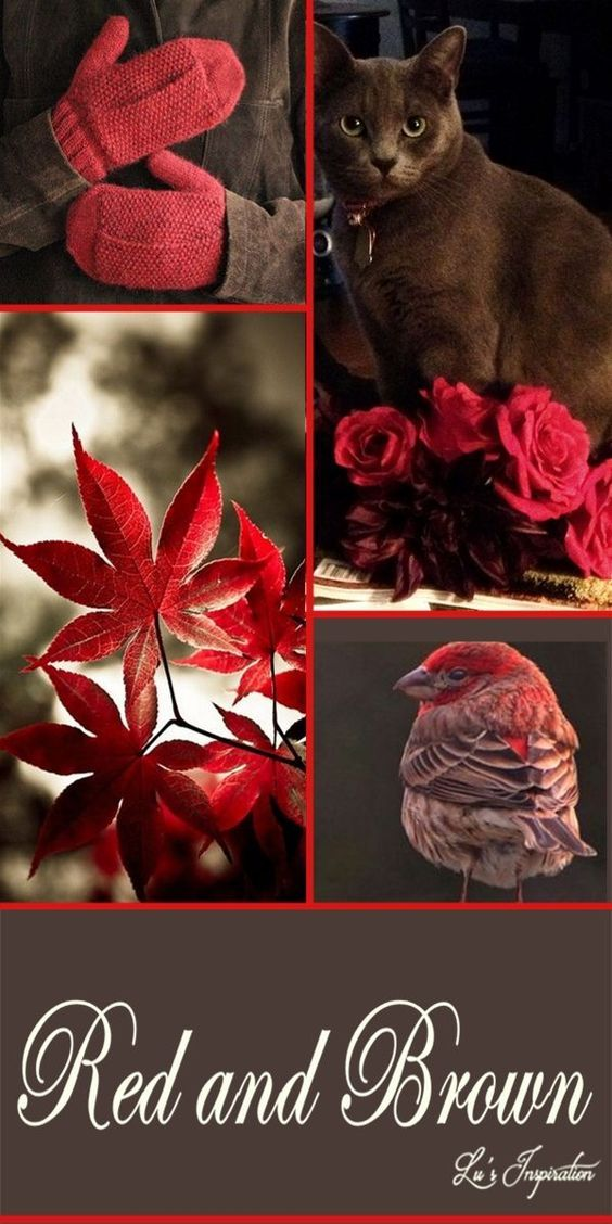 RED AND BROWN ~~