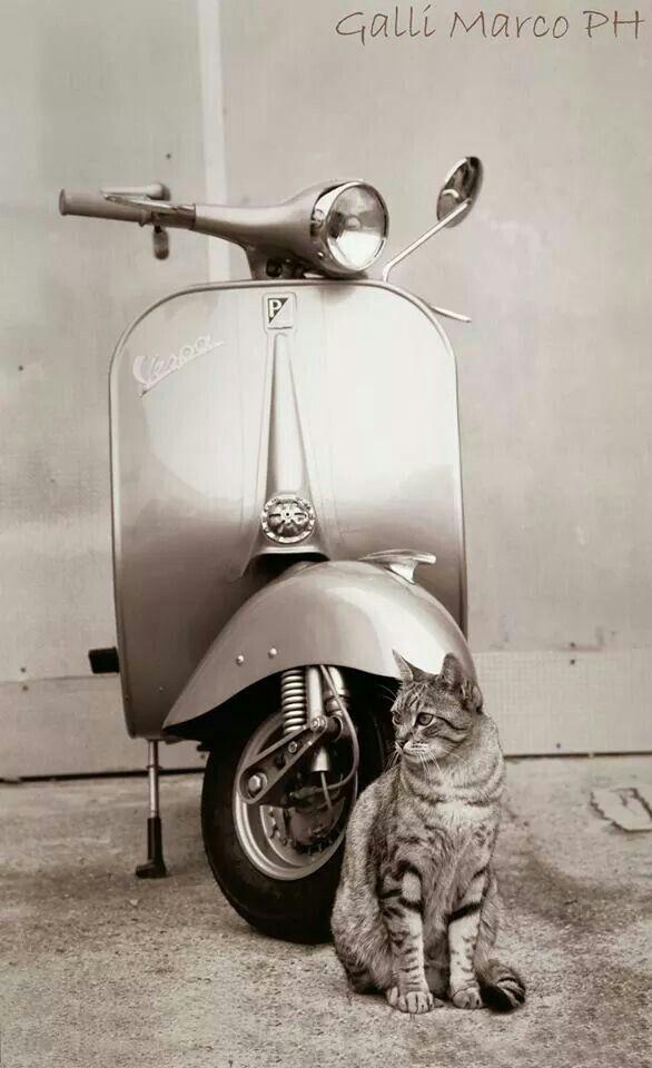 ( ^-^)ノ∠※。.:*:・'°☆ vespa and cat #vespa #italiandesign