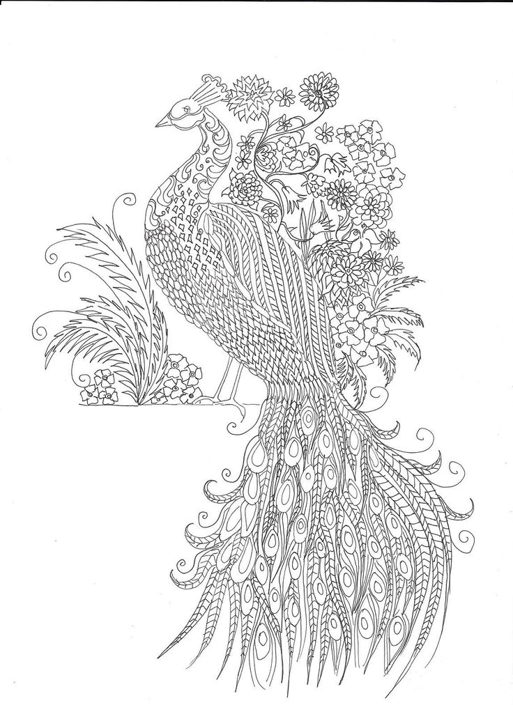 1000 images about peacocks art coloring on pinterest creative coloring books and coloring - Dessin pour anniversaire adulte ...