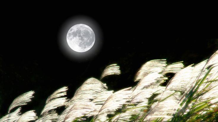 10月4日は旧暦8月15日、中秋の名月です。中秋の名月は、秋雨や台風のことが多いのですが、今年は大きな移動性高気圧に覆われ、ほぼ全国的に名月が見れそうです。名月が台風で見れないときは、高潮が危険です。