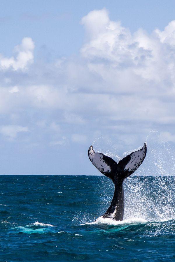 whale tale slap