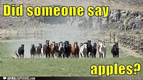 Apples?Beautiful Horses, Trucks, Ponies Hearing, Animal Capshunz, Herd Apples, House, Internet Animal