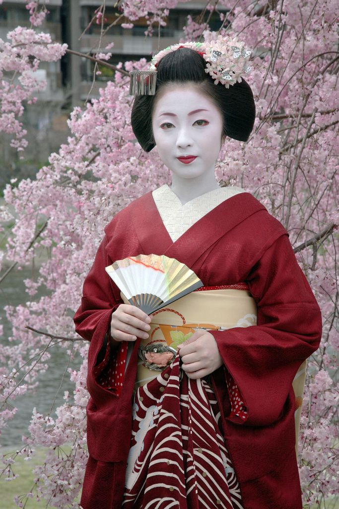 "Kimika, a high ranking maiko (apprentice geiko) of Miyagawa-cho ~ one of Kyoto's five ""flower towns"" (hanamachi, where geisha live, train, and entertain). Behind her, a cascade of pink cherry blossoms..."
