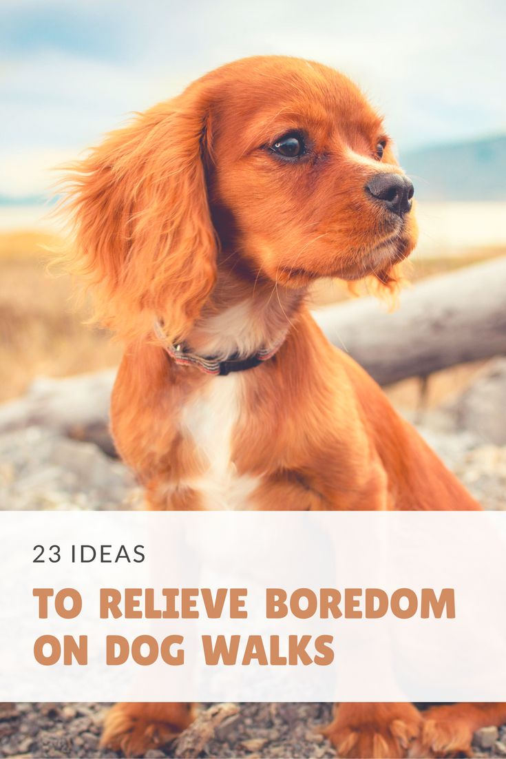 Are you frequently bored while walking your dog? You're not alone! We've compiled a list of 23 ideas to help you keep your sanity!