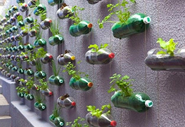 Vertical garden with bottles!