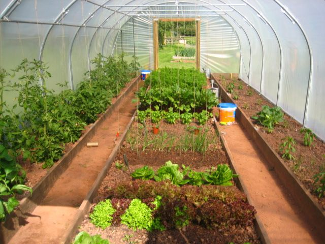 The poly tunnel first year jealous secret garden for Garden greenhouse design