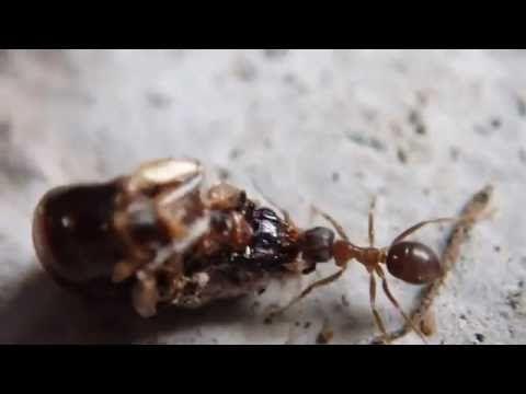 蟻が大きな獲物を引っ張っていました。小さな虫がよぎったのでカメラを移動したら、トビムシの仲間でしょうか少し大きな虫が・・・小さな世界は人知れず生き続けているようです。