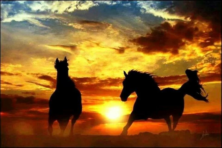 Horses in the Sunset | Pin it Like Image