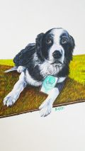 """""""Cody"""" Acrylic on watercolour paper www.furryfaces.co.nz"""