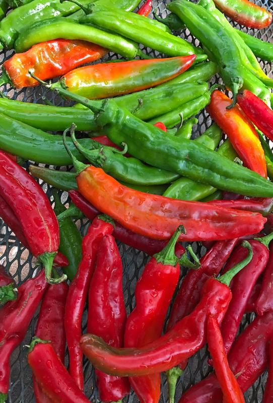 Chile Roasting at the Farm Shop, Join Armijo Organic Farms and the Los Poblanos Farm Shopfor acherished local tradition! Rent a cozy historic adobe home, Currently available Oct. 21st - 26th, Oct. 30th to Nov. 15th, Nov. 26th to Dec. 14th. You might want to think about Fall, It's beautiful in Santa Fe!! and Christmas is enchanting too, open at this time at $129, check it out https://www.airbnb.com/rooms/2562597